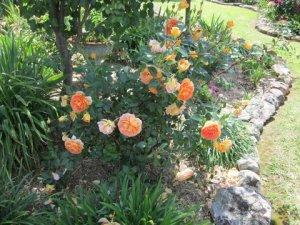 Pat's garden 2